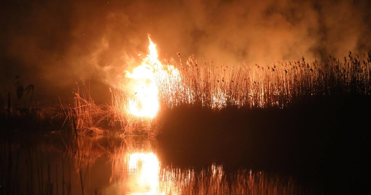 Biebrzański Park Narodowy podpalono celowo, ale winnych nie udało się ustalić.
