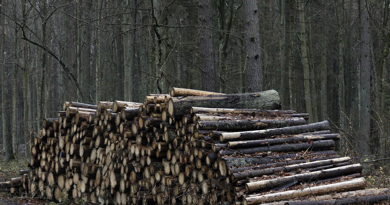 KE rozpoczyna procedurę przeciwko Polsce. Chodzi o Puszczę Białowieską