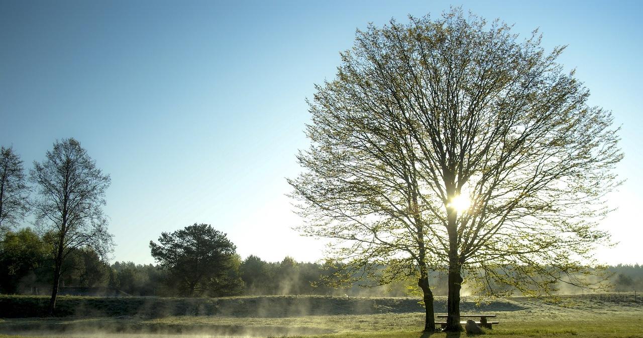 Wiosenna temperatura przez cały tydzień. Sprawdź prognozę pogody