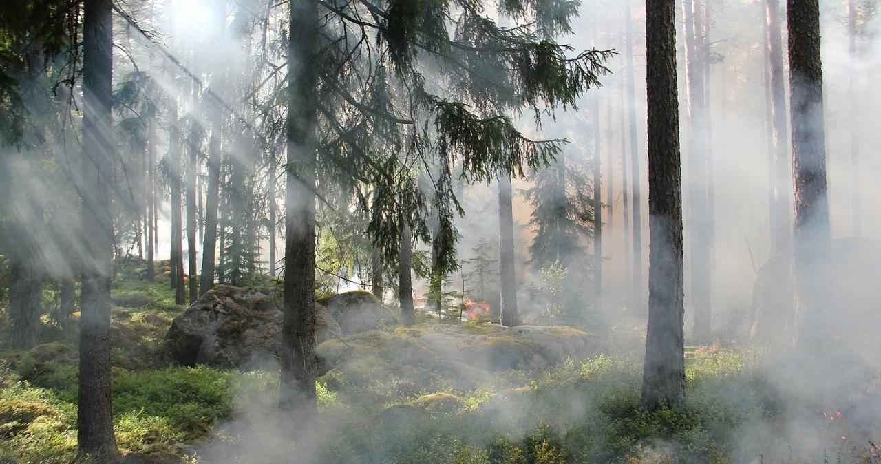 Najwyższy stopień pożarowy w lasach: Alert dla kilku województw