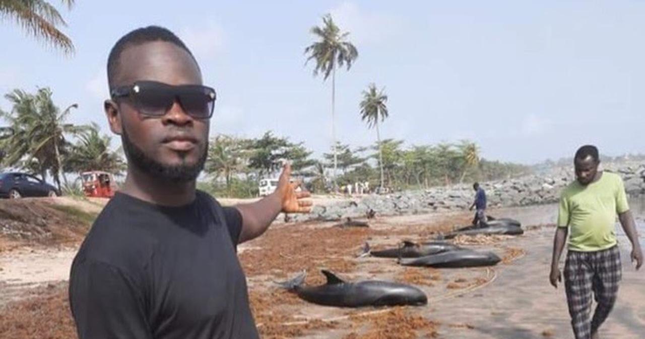 Dziesiątki martwych delfinów na plaży. Ghana rozpoczyna śledztwo