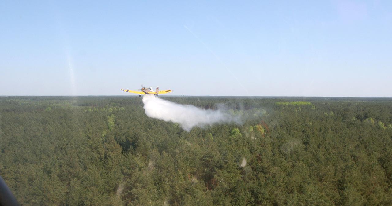 Płoną lasy pod Warszawą. Strażaków i leśników wspomaga dromader