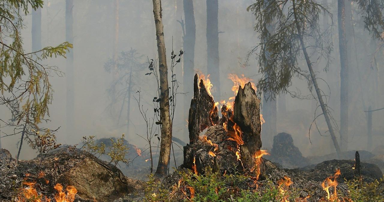 Alert dla 12 województw: Najwyższy stopień zagrożenia pożarowego w lasach