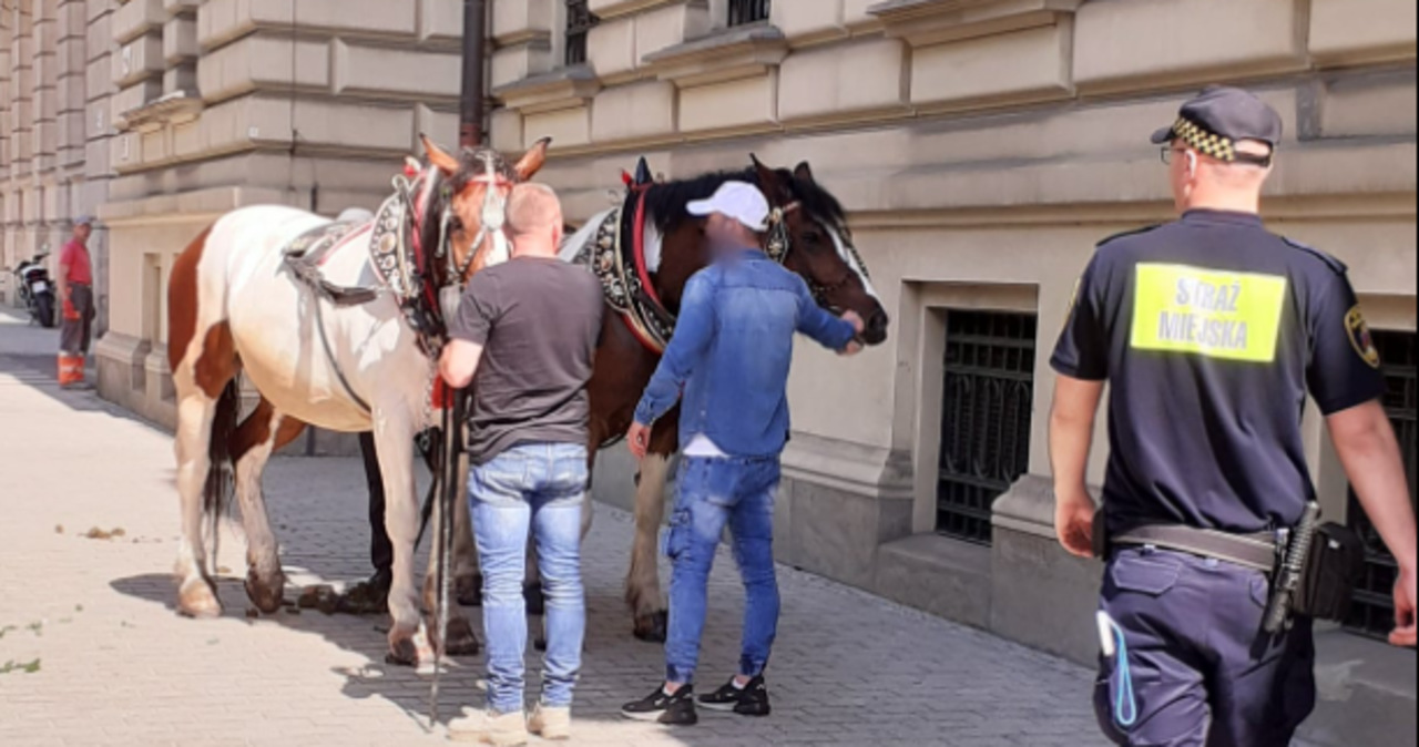 """""""Skandal na ulicach Krakowa"""". Konie z dorożką pędziły przez centrum miasta"""