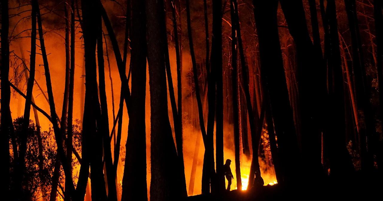Płoną lasy na południu Hiszpanii. Ogień szybko się rozprzestrzenia