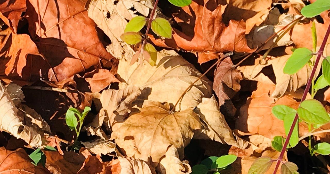 Nawet 24 stopnie! W poniedziałek kolejny dzień złotej polskiej jesieni